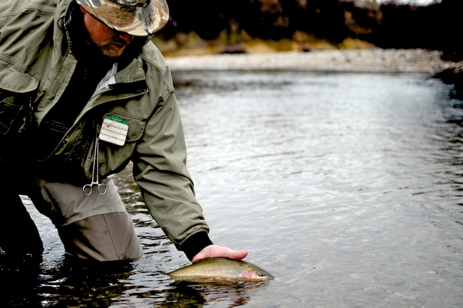 The West Fork Bitterroot is home to beautiful wild cutthroat trout.