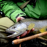 big-river-tenkara-brown (4)